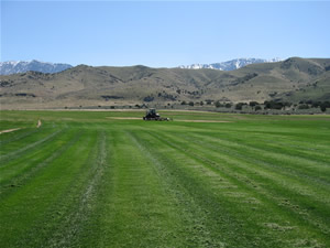 Rocky Mountain Turf Farm