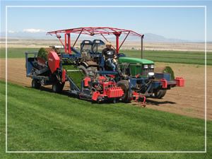 Rocky Mountain Turf Farm Sod Cutter